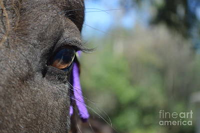 Royal Lashes Art Print by Catherine Peterson