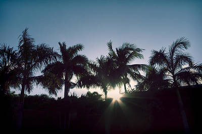 Photograph - Royal Palm Sunset by Chris Reed
