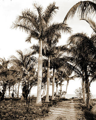 Miami Drawing - Royal Palms At Cocoanut Grove I.e by Litz Collection