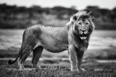 Bw Photograph - Royal Pose by Mohammed Alnaser