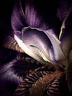 Photograph - Royal Purple  by Chris Berry