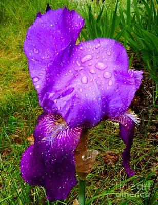 Photograph - Royal Rain by Julia Hassett