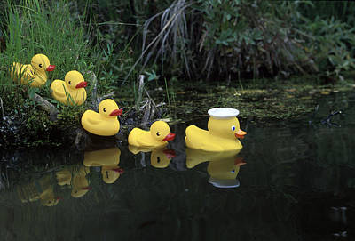 Rubber Ducks In A Row Pond Southcentral Art Print by Jeff Schultz