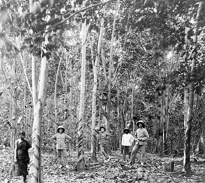 Overseer Photograph - Rubber Tree Plantation by Library Of Congress
