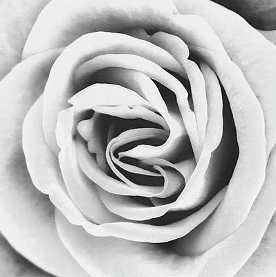Rubellite Rose Bw Palm Springs Print by William Dey