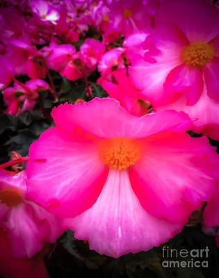 Iphone4 Photograph - Ruby Begonia by Susan Serna