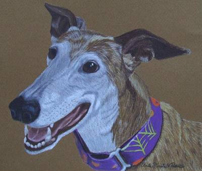 Drawing - Ruby-greyhound Commission by Anita Putman