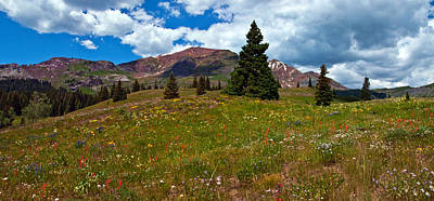Photograph - Ruby Range Wildflowers  by Eric Rundle