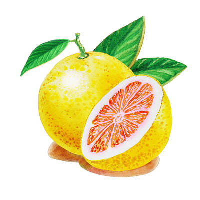 Ruby Red Grapefruit Print by Irina Sztukowski