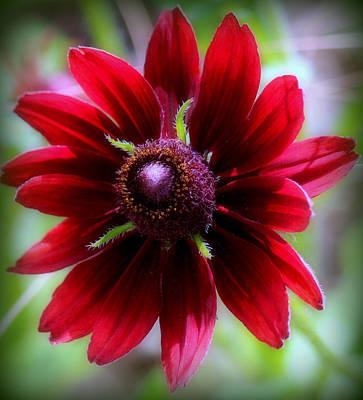 Ruby Red Love Original
