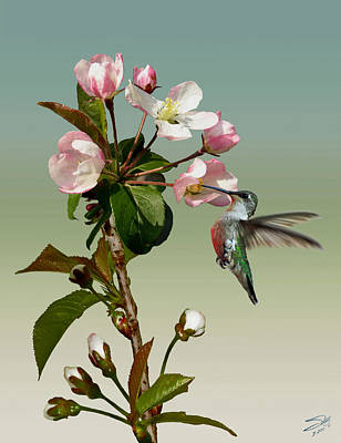 Digital Art - Ruby Throated Humming Bird And Apple Blossom by IM Spadecaller