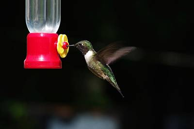 Photograph - Ruby Throated Hummingbird At The Feeder by Billy  Griffis Jr