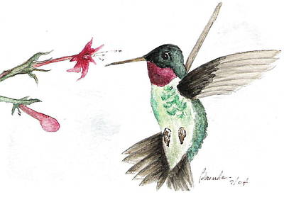 Painting - Ruby Throated Hummingbird by Brenda Ruark