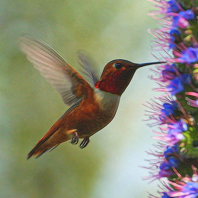 Digital Art - Ruby Throated Hummingbird Digital Art by Ernie Echols