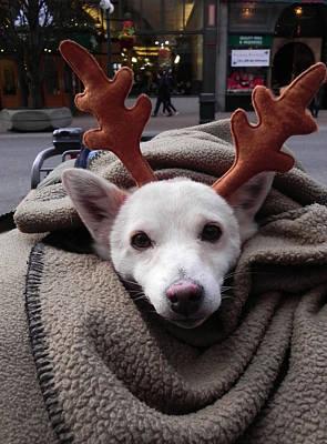 Photograph - Rudolph by Cheryl Hoyle