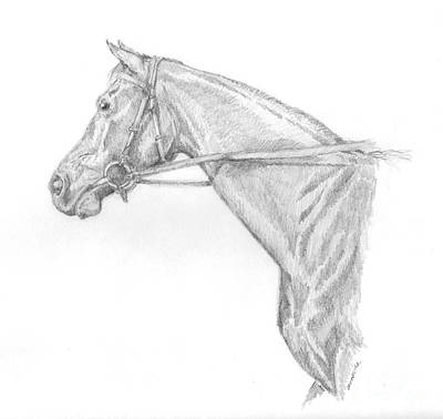 Texas Drawing - Ruffian  by Sue Bonnar