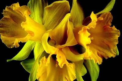 Photograph - Ruffled Daffodils by Marianne Dow