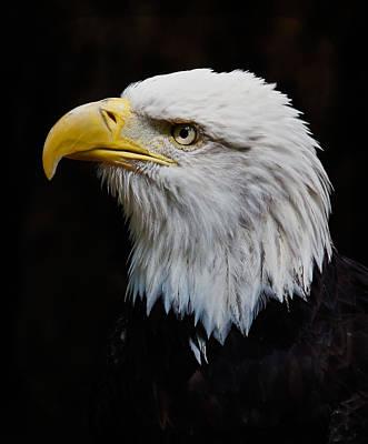 Photograph - Ruffled Feathers by Athena Mckinzie