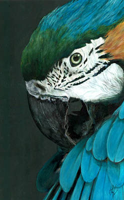 Painting - Ruffled Feathers by Hannah Taylor