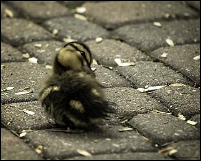Photograph - Ruffled Feathers Spring Duckling  by LeeAnn McLaneGoetz McLaneGoetzStudioLLCcom