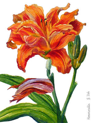 Painting - Ruffled Orange Daylily - Hemerocallis by Janet  Zeh