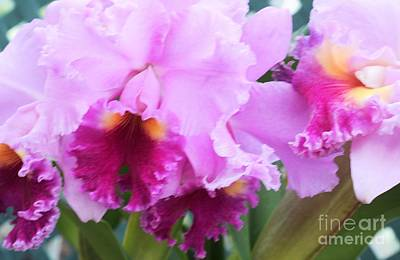 Ruffled Orchids Art Print by Kathleen Struckle