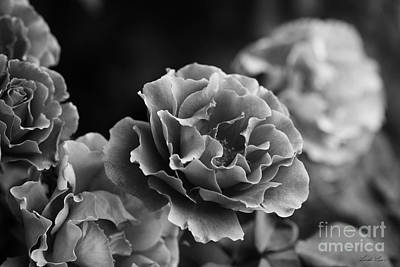 Photograph - Ruffles by Linda Lees