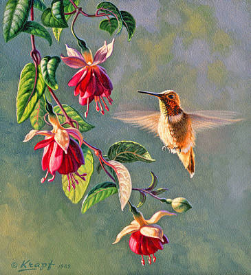 Hummingbirds Painting - Rufous And Fuschia by Paul Krapf