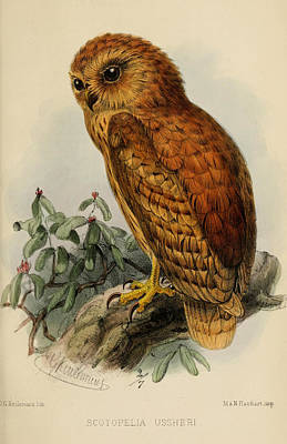 Rufous Wall Art - Painting - Rufous Fishing Owl by Dreyer Wildlife Print Collections