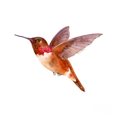 White Background Painting - Rufous Hummingbird by Amy Kirkpatrick