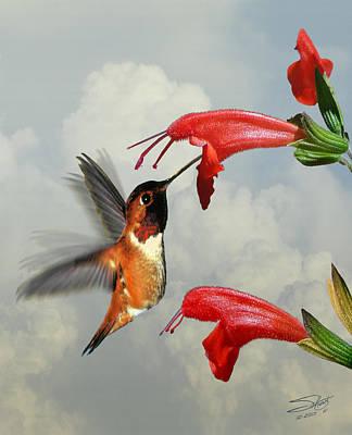 Rufous Hummingbird And Wild Flower Art Print