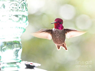 Photograph - Rufous Hummingbird by Parrish Todd