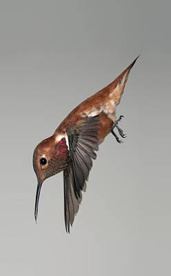 Photograph - Rufous Hummingbird - Phone Case Design by Gregory Scott