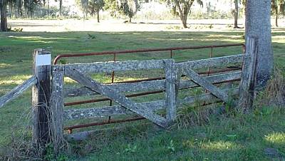 Photograph - Rugged Old Fence by Cheryl Waugh Whitney