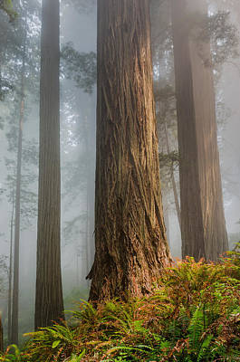 Photograph - Rugged Redwoods by Greg Nyquist