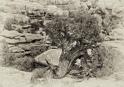 Rugged Tree Art Print