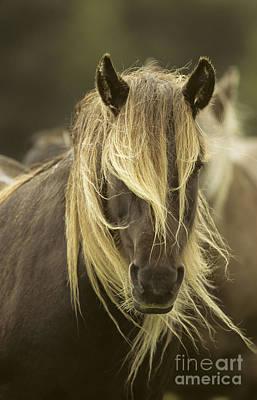 Photograph - Rum Pony by John Cancalosi