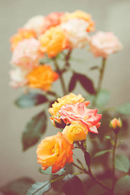 Photograph - Rumba Rose by Ari Salmela