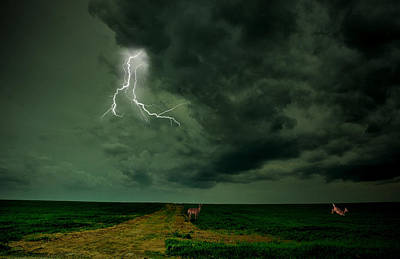 Lightning Photograph - Run Forest Run by Emily Stauring