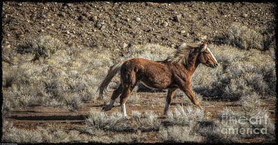 Palomino Horse Photograph - Run Little Pony by Mitch Shindelbower