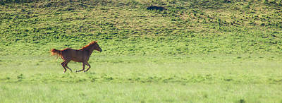 Photograph - Runaway Colt Panorama by Mary Lee Dereske