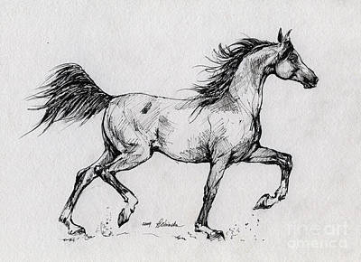 Running Horses Drawing - Running Arabian Horse Drawing 1 by Angel  Tarantella
