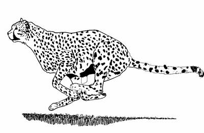 Cheetah Drawing - Running Cheetah Spotted by Teresa  Peterson