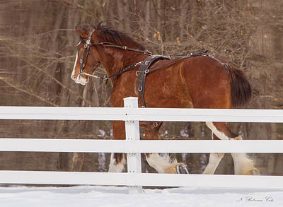Photograph - Running Clydesdale by Natalie Rotman Cote