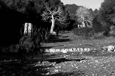Photograph - Minorcan Black Horses - Running Free Black And White Edition by Pedro Cardona