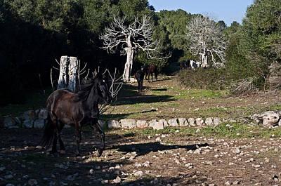 Global Design Shibori Inspired - Minorcan black horses - Running free by Pedro Cardona Llambias