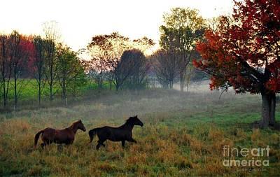 Photograph - Running Free by Terri Gostola