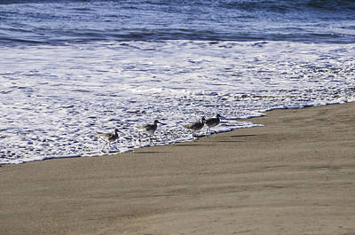 Photograph - Running From The Tide by Sherri Meyer