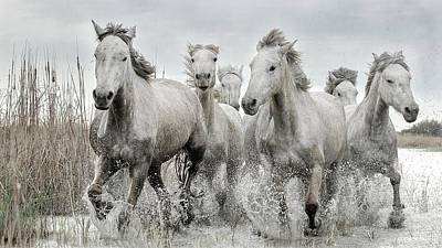 Running Horses Photograph - Running Gang by Lucie Bressy