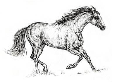 Running Horses Drawing - Running  Horse 08 10 2013 by Angel  Tarantella